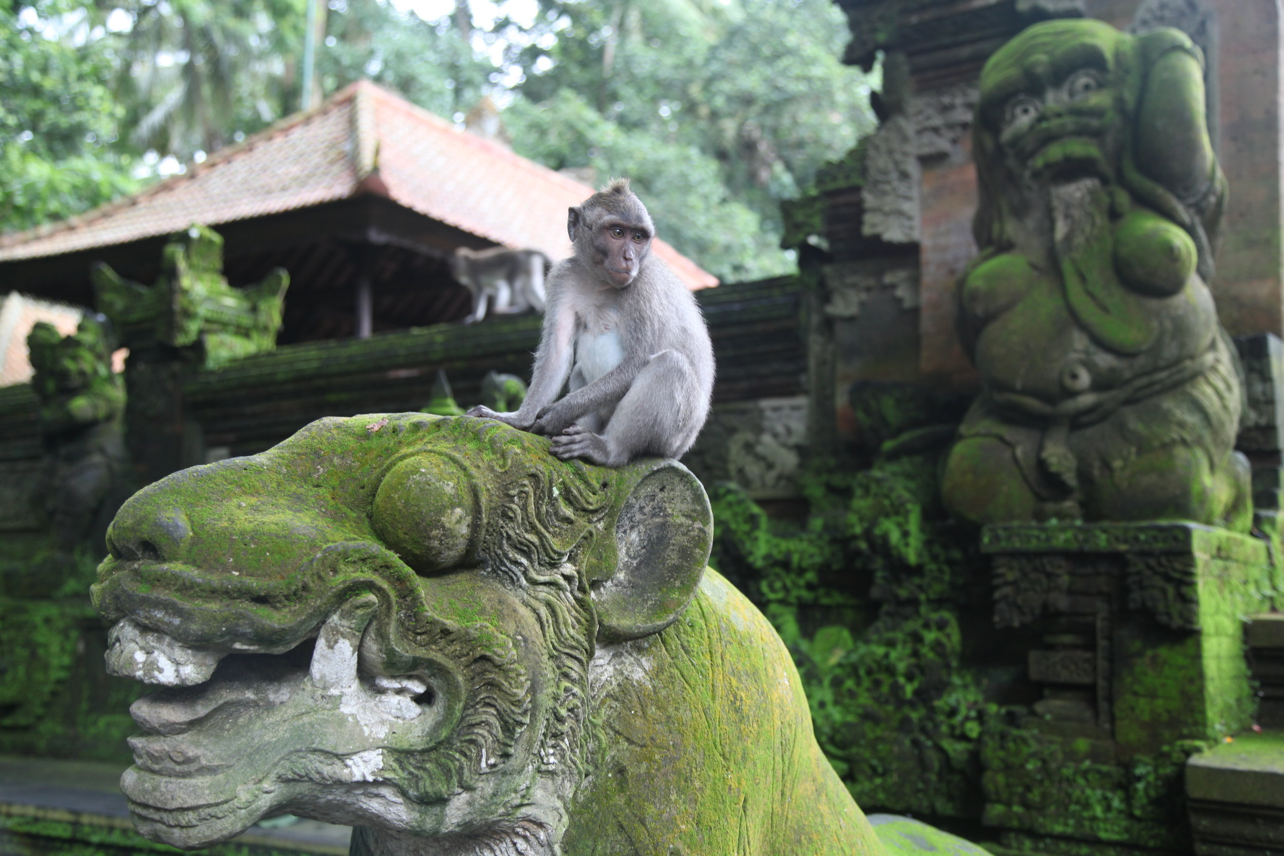 Monkey Forest in Ubud: hold on to your valuables!
