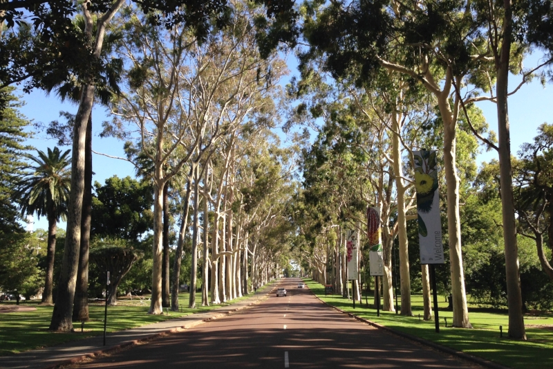Kings Park: View of Fraser Avenue from city entrance